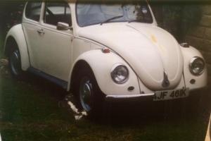 Godly Beetle.